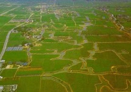 筑紫平野 稲作